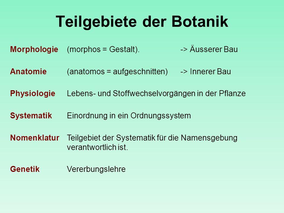 Teilgebiete der Botanik Morphologie (morphos = Gestalt). -> Äusserer Bau Anatomie (anatomos = aufgeschnitten)-> Innerer Bau Physiologie Lebens- und St