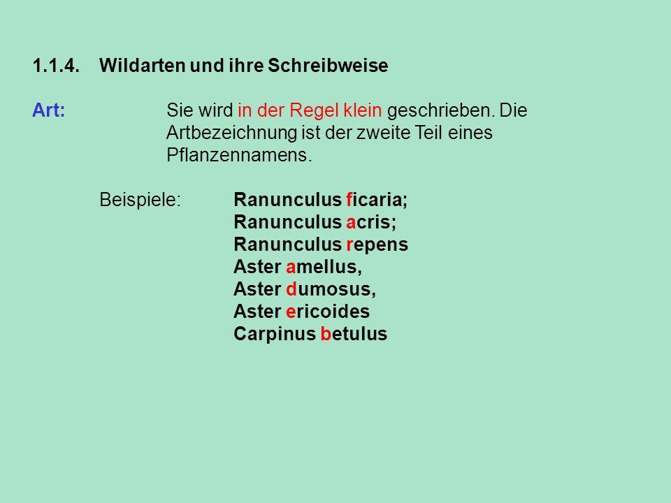 1.1.4. Wildarten und ihre Schreibweise Art: Sie wird in der Regel klein geschrieben. Die Artbezeichnung ist der zweite Teil eines Pflanzennamens. Beis