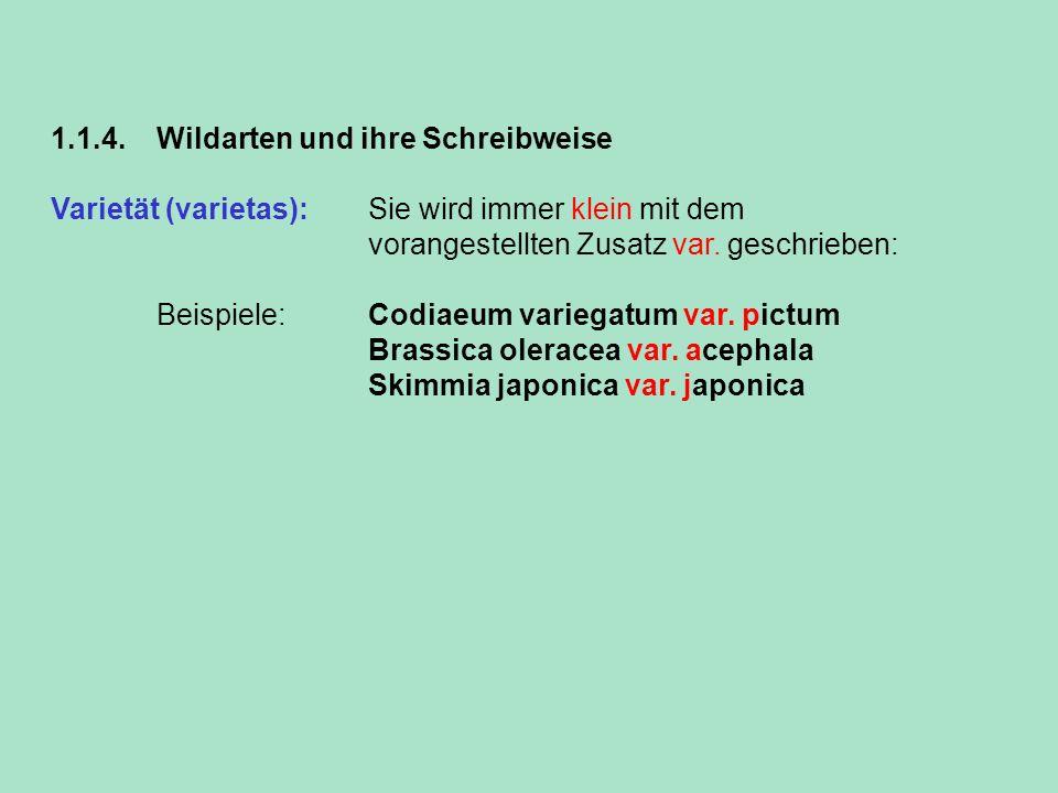 1.1.4. Wildarten und ihre Schreibweise Varietät (varietas): Sie wird immer klein mit dem vorangestellten Zusatz var. geschrieben: Beispiele: Codiaeum