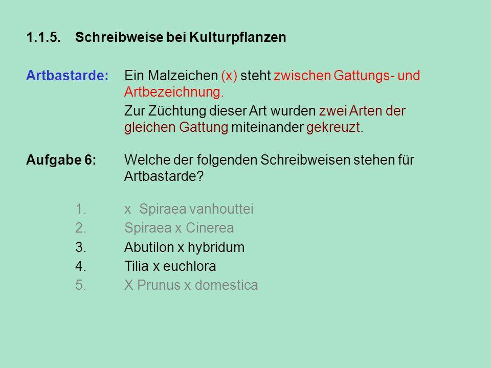 1.1.5.Schreibweise bei Kulturpflanzen Artbastarde: Ein Malzeichen (x) steht zwischen Gattungs- und Artbezeichnung. Zur Züchtung dieser Art wurden zwei