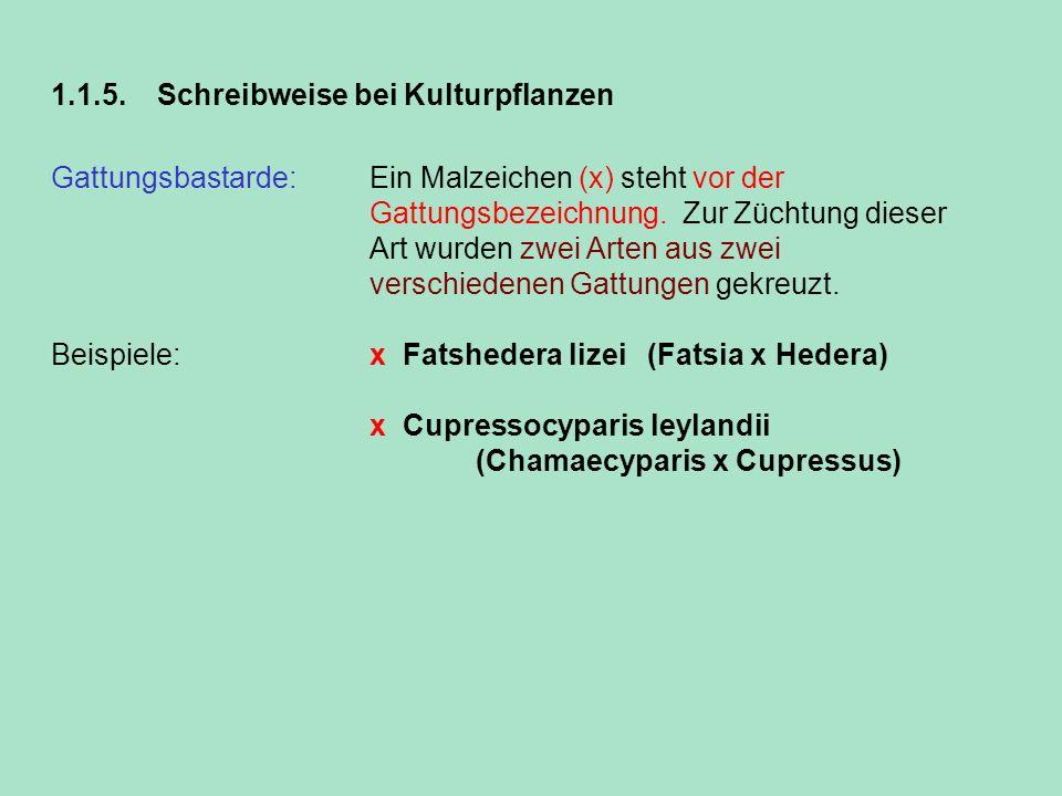 1.1.5.Schreibweise bei Kulturpflanzen Gattungsbastarde: Ein Malzeichen (x) steht vor der Gattungsbezeichnung. Zur Züchtung dieser Art wurden zwei Arte