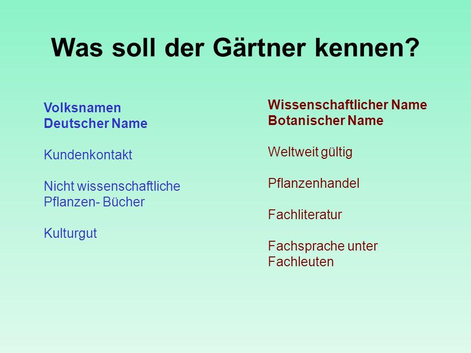Was soll der Gärtner kennen? Volksnamen Deutscher Name Kundenkontakt Nicht wissenschaftliche Pflanzen- Bücher Kulturgut Wissenschaftlicher Name Botani