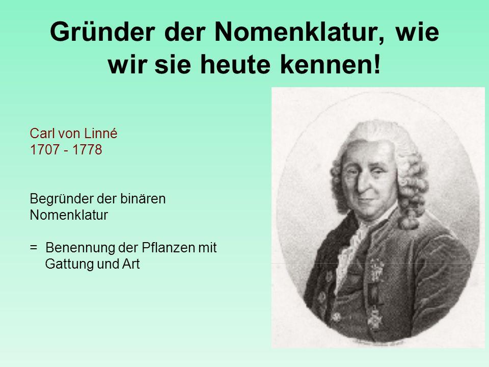 Gründer der Nomenklatur, wie wir sie heute kennen! Carl von Linné 1707 - 1778 Begründer der binären Nomenklatur = Benennung der Pflanzen mit Gattung u