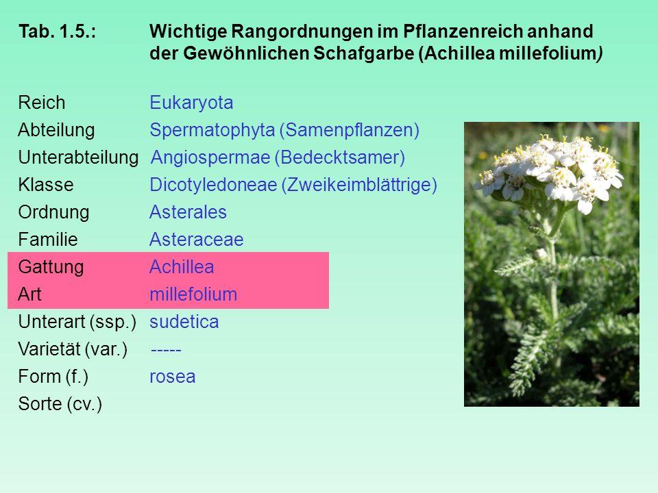 Tab. 1.5.: Wichtige Rangordnungen im Pflanzenreich anhand der Gewöhnlichen Schafgarbe (Achillea millefolium) ReichEukaryota AbteilungSpermatophyta (Sa