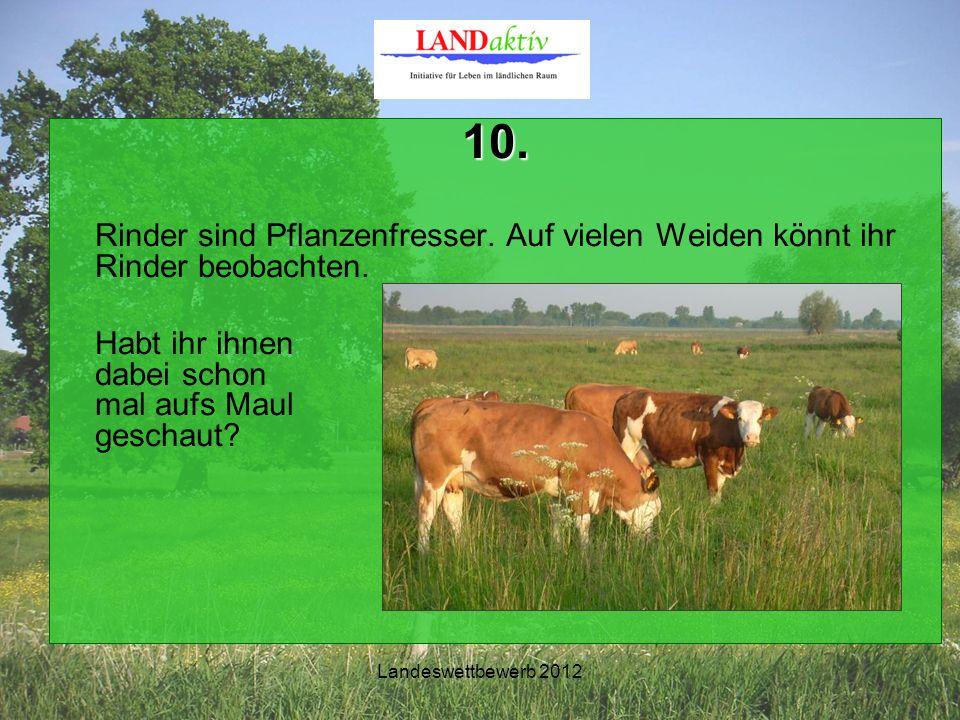 Landeswettbewerb 2012 10. Rinder sind Pflanzenfresser.