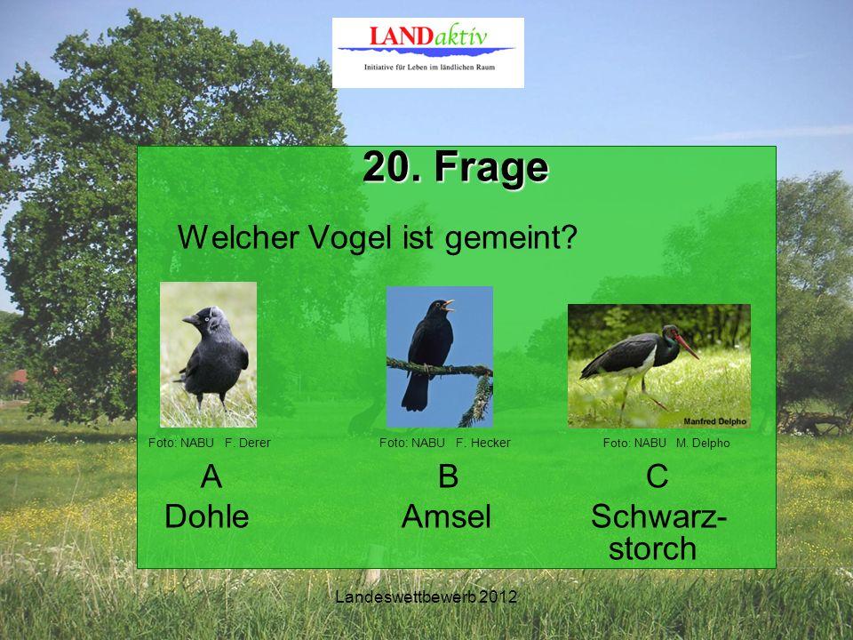 Landeswettbewerb 2012 20. Frage Welcher Vogel ist gemeint.