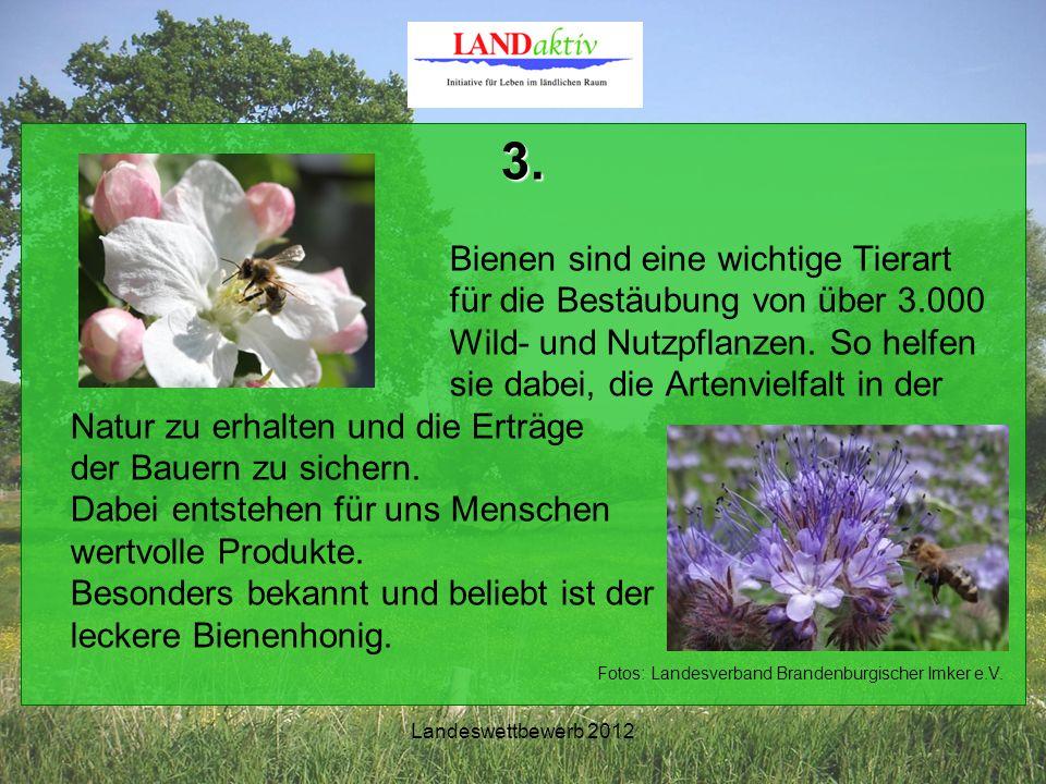 Landeswettbewerb 2012 3. Bienen sind eine wichtige Tierart für die Bestäubung von über 3.000 Wild- und Nutzpflanzen. So helfen sie dabei, die Artenvie