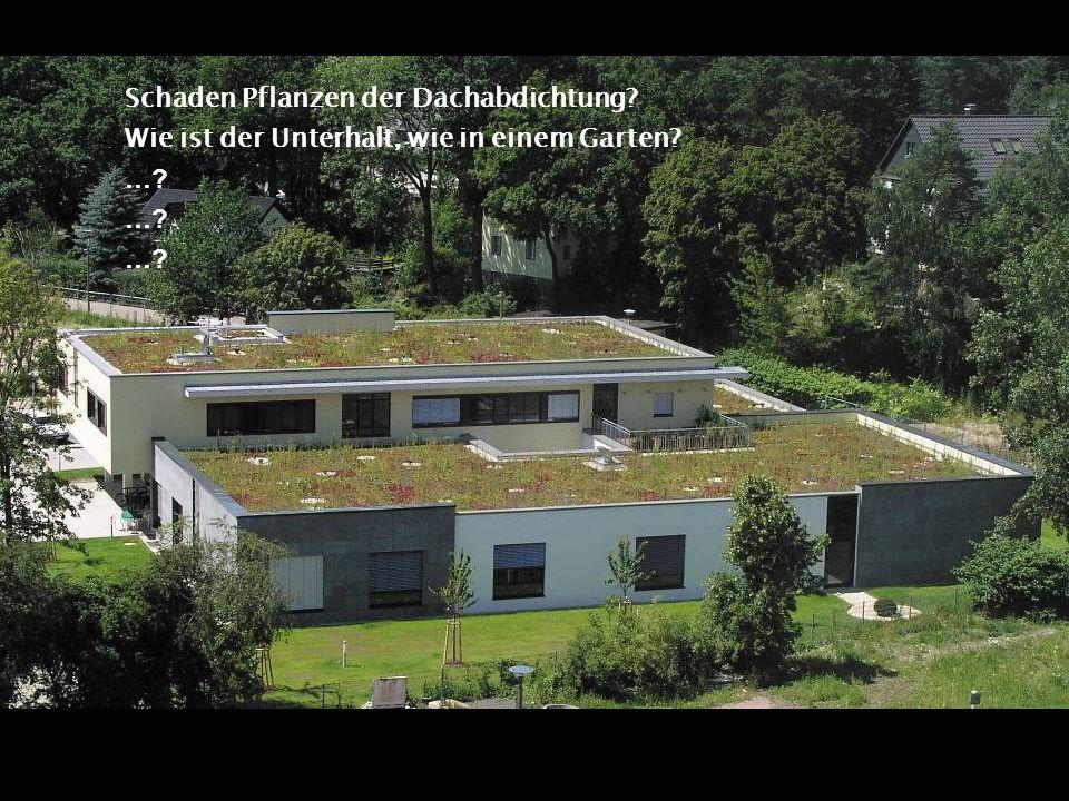 Schaden Pflanzen der Dachabdichtung? Wie ist der Unterhalt, wie in einem Garten? …?