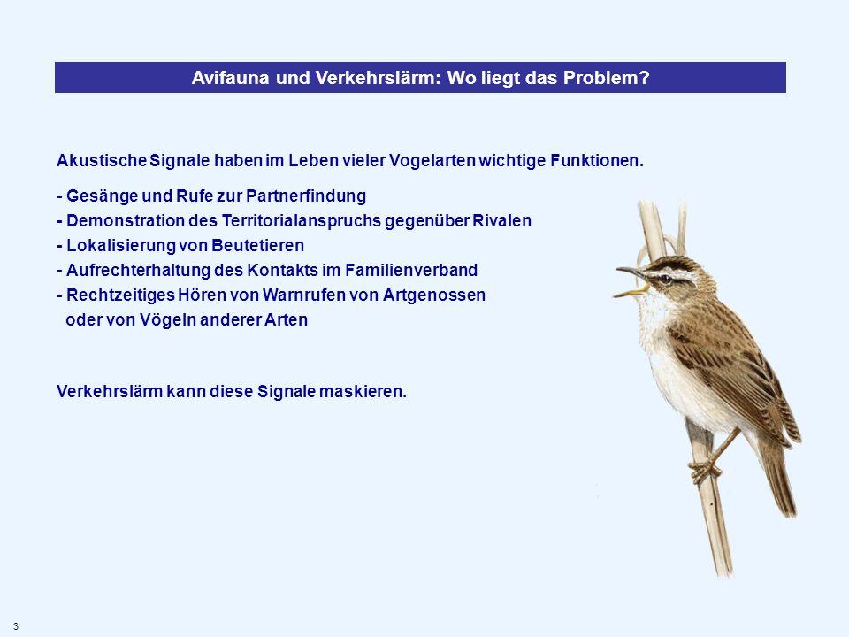 Akustische Signale haben im Leben vieler Vogelarten wichtige Funktionen. - Gesänge und Rufe zur Partnerfindung - Demonstration des Territorialanspruch