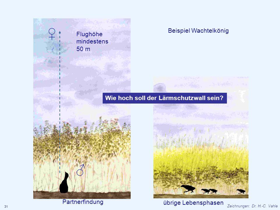 Beispiel Wachtelkönig Partnerfindung übrige Lebensphasen Flughöhe mindestens 50 m Wie hoch soll der Lärmschutzwall sein? 31 Zeichnungen: Dr. H.-C. Vah