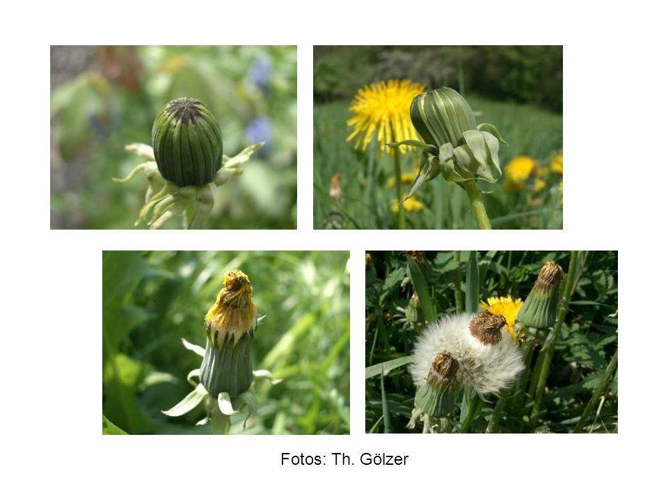 Fotos: Th. Gölzer