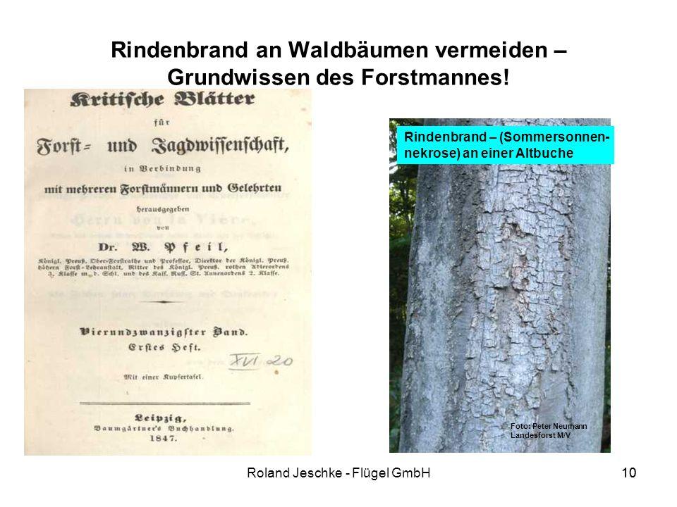 10Roland Jeschke - Flügel GmbH10 Rindenbrand an Waldbäumen vermeiden – Grundwissen des Forstmannes.