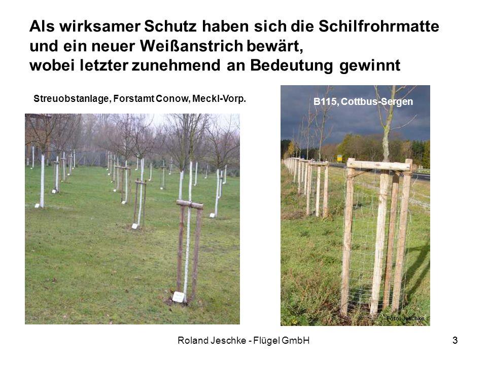 3Roland Jeschke - Flügel GmbH3 Als wirksamer Schutz haben sich die Schilfrohrmatte und ein neuer Weißanstrich bewärt, wobei letzter zunehmend an Bedeutung gewinnt Streuobstanlage, Forstamt Conow, Meckl-Vorp.