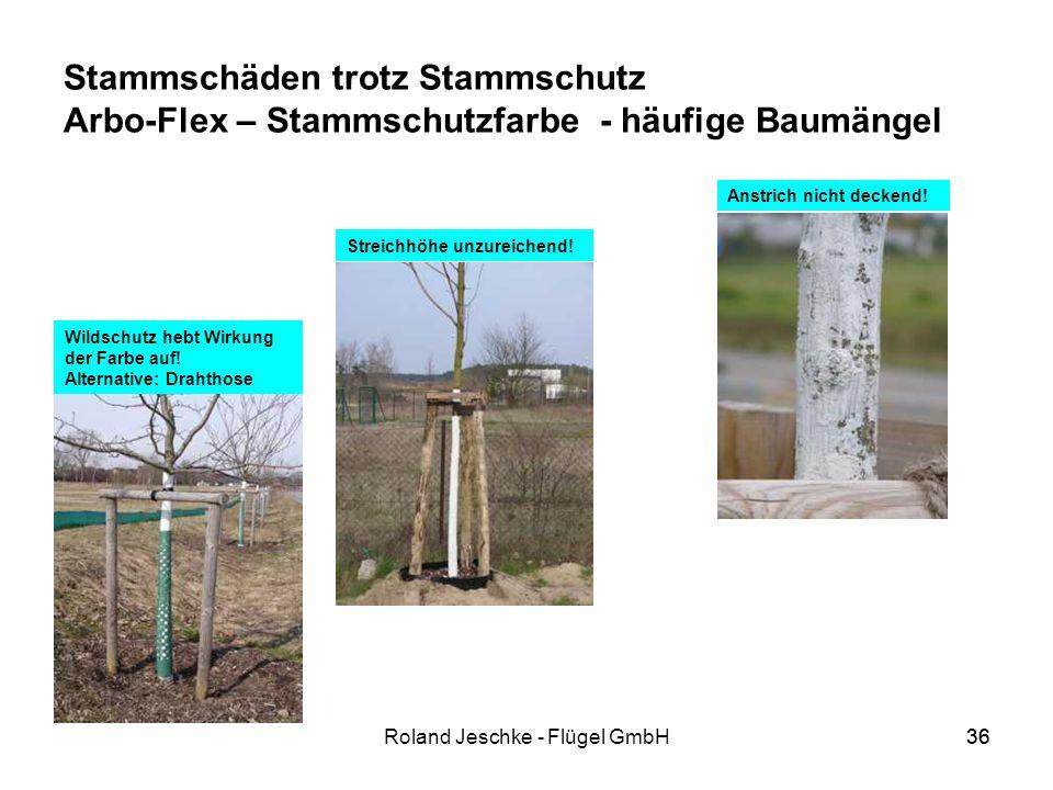 36Roland Jeschke - Flügel GmbH36 Stammschäden trotz Stammschutz Arbo-Flex – Stammschutzfarbe - häufige Baumängel Anstrich nicht deckend.
