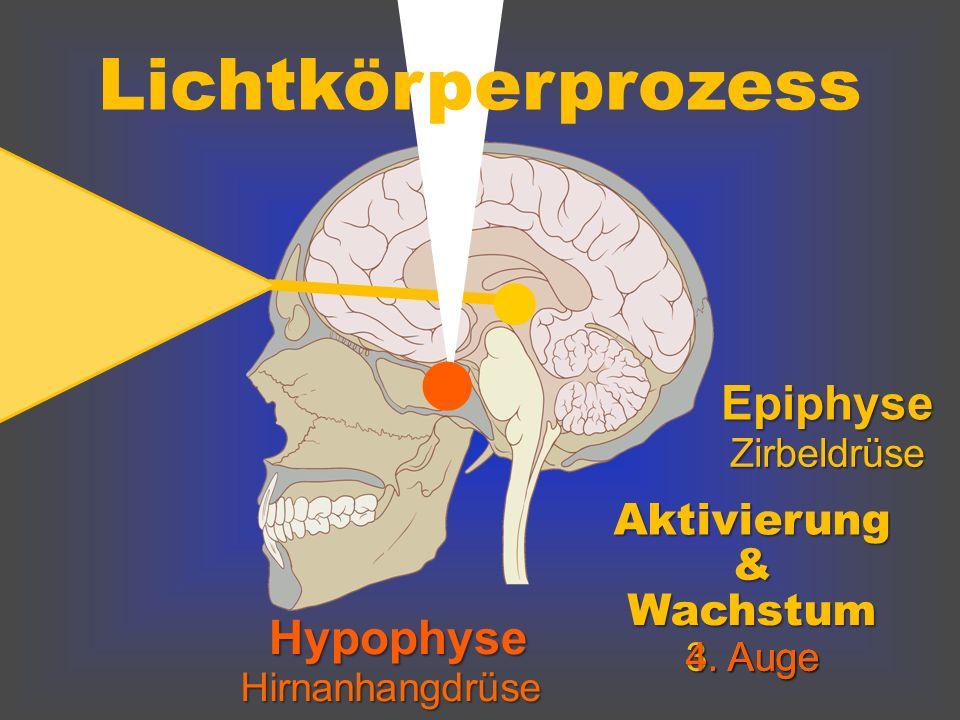 Hypophyse Hirnanhangdrüse Epiphyse Zirbeldrüse Lichtkörperprozess Aktivierung & Wachstum 3. Auge 4. Auge