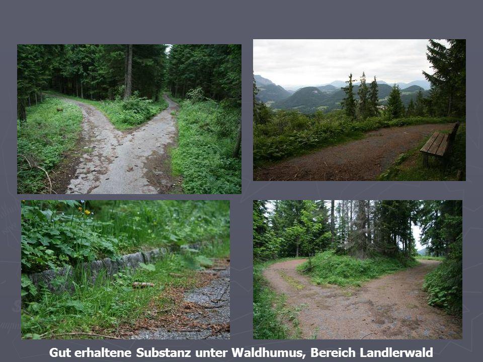 41 Gut erhaltene Substanz unter Waldhumus, Bereich Landlerwald