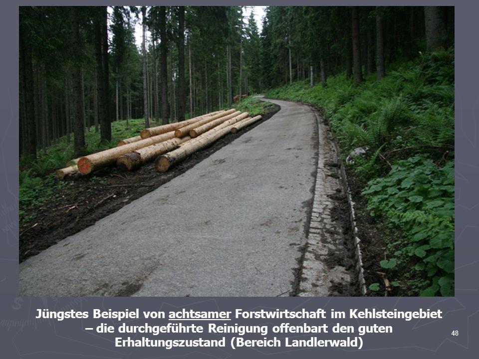 48 Jüngstes Beispiel von achtsamer Forstwirtschaft im Kehlsteingebiet – die durchgeführte Reinigung offenbart den guten Erhaltungszustand (Bereich Lan