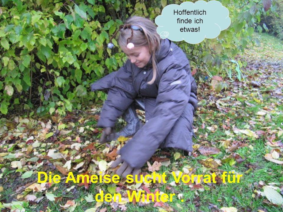 Hoffentlich finde ich etwas!. Die Ameise sucht Vorrat für den Winter.
