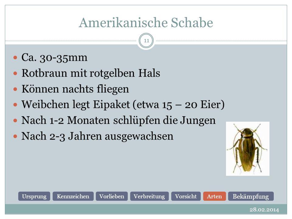 Amerikanische Schabe 28.02.2014 11 Ca.