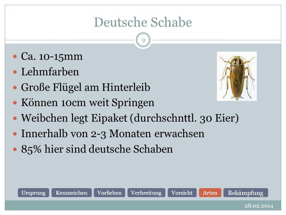 Deutsche Schabe 28.02.2014 9 Ca.