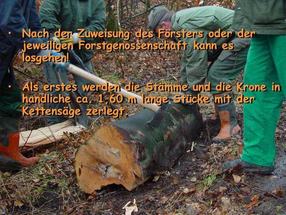 Nach der Zuweisung des Försters oder der jeweiligen Forstgenossenschaft kann es losgehen! Als erstes werden die Stämme und die Krone in handliche ca.