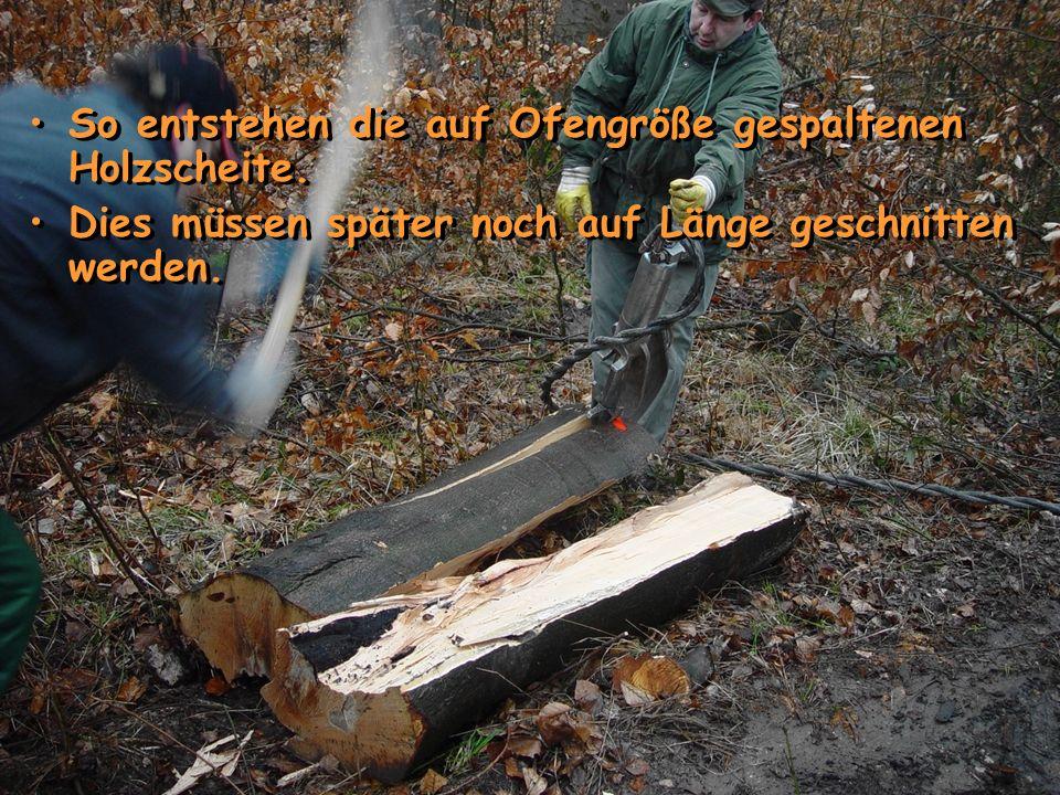 So entstehen die auf Ofengröße gespaltenen Holzscheite. Dies müssen später noch auf Länge geschnitten werden. So entstehen die auf Ofengröße gespalten