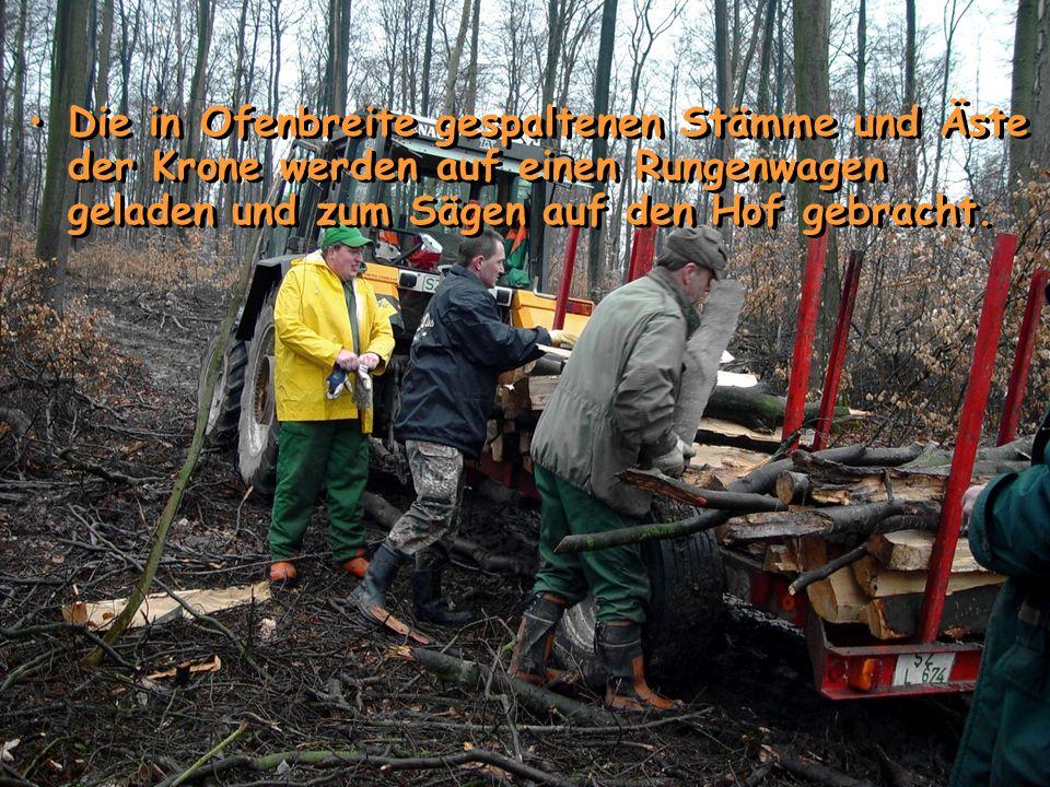 Die in Ofenbreite gespaltenen Stämme und Äste der Krone werden auf einen Rungenwagen geladen und zum Sägen auf den Hof gebracht.
