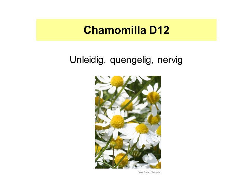 Pulsatilla D12 Weinerlich, anschmiegsam, liebesbedürftig Foto: Franz Stempfle