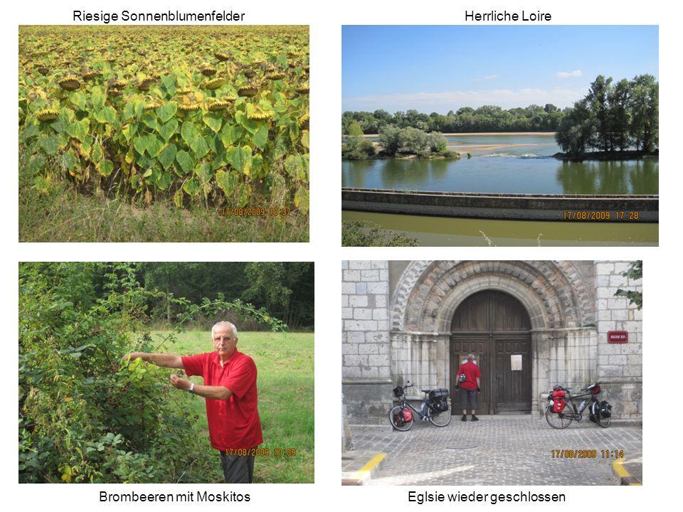 Brombeeren mit Moskitos Riesige SonnenblumenfelderHerrliche Loire Eglsie wieder geschlossen