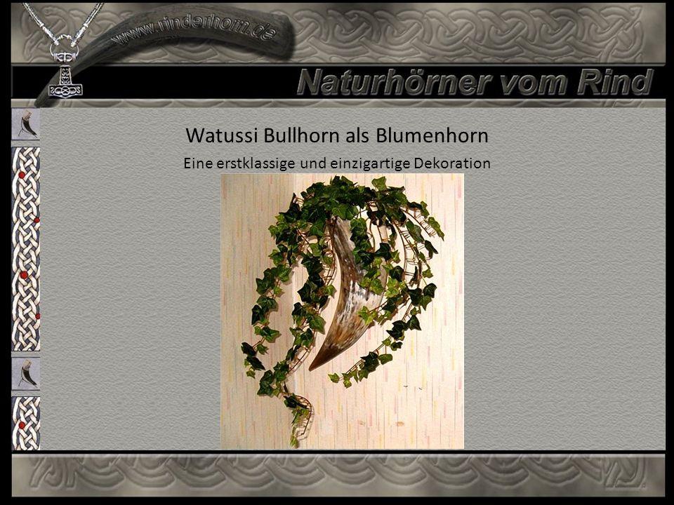 Watussi Bullhorn als Blumenhorn Eine erstklassige und einzigartige Dekoration