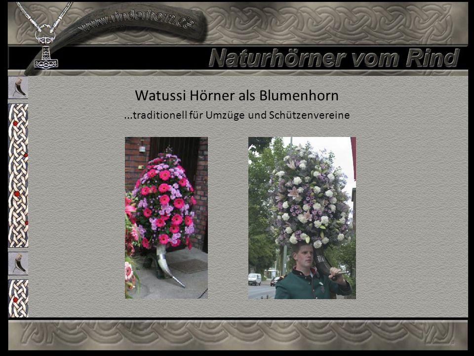 Watussi Hörner als Blumenhorn...traditionell für Umzüge und Schützenvereine