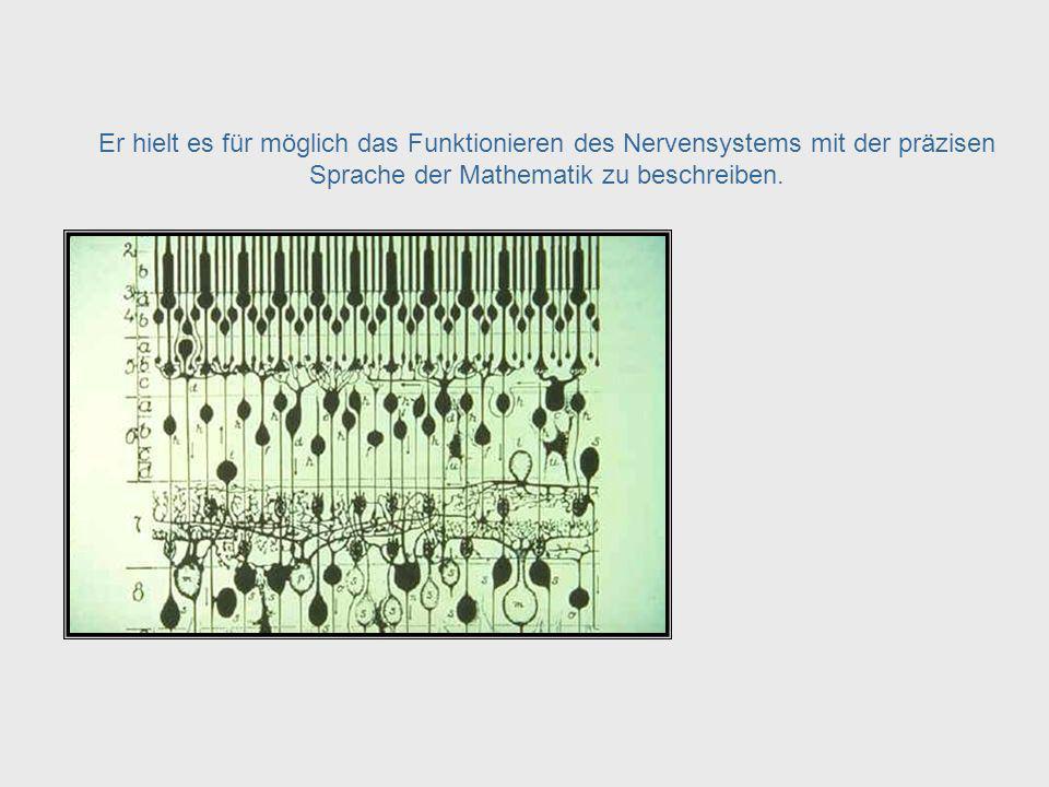 ... das menschliche Nervensystem. The Human Nervous System