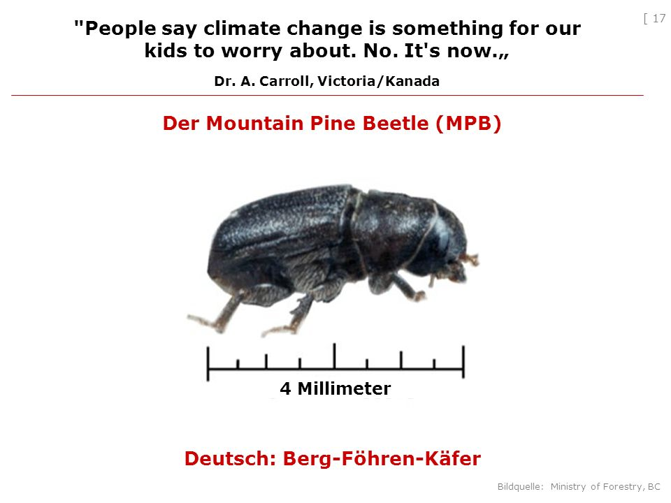 [ 17 Der Mountain Pine Beetle (MPB) Deutsch: Berg-Föhren-Käfer People say climate change is something for our kids to worry about.