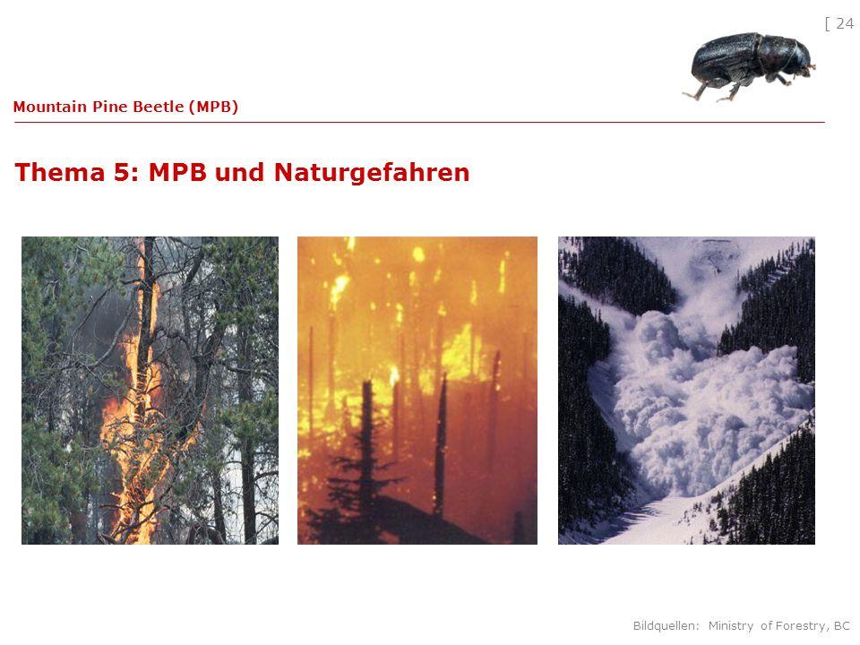 [ 24 Thema 5: MPB und Naturgefahren Mountain Pine Beetle (MPB) Bildquellen: Ministry of Forestry, BC