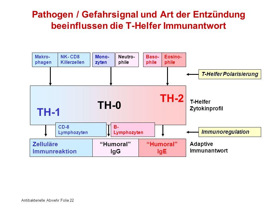 Antibakterielle Abwehr Folie 22 Pathogen / Gefahrsignal und Art der Entzündung beeinflussen die T-Helfer Immunantwort Makro- phagen Mono- zyten Neutro