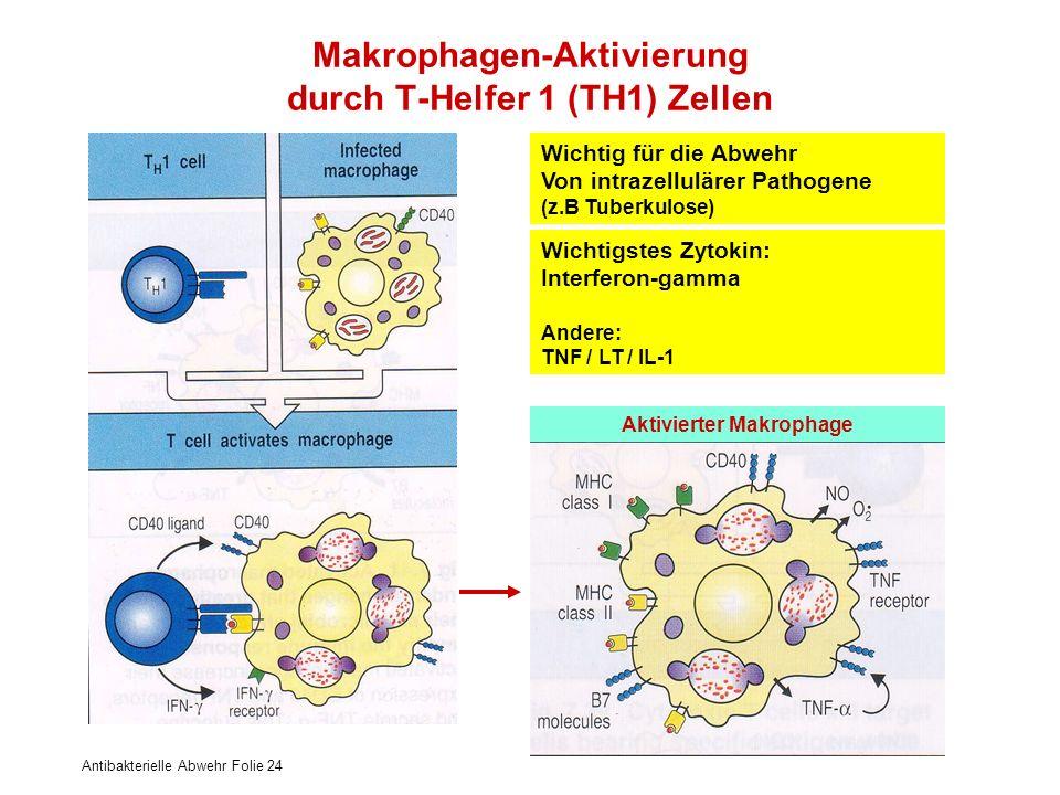 Antibakterielle Abwehr Folie 24 Makrophagen-Aktivierung durch T-Helfer 1 (TH1) Zellen Wichtig für die Abwehr Von intrazellulärer Pathogene (z.B Tuberk