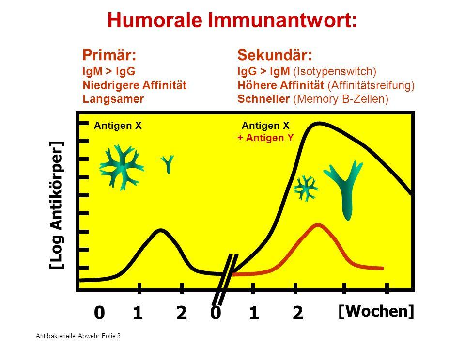 Antibakterielle Abwehr Folie 3 Primär: IgM > IgG Niedrigere Affinität Langsamer Sekundär: IgG > IgM (Isotypenswitch) Höhere Affinität (Affinitätsreifu