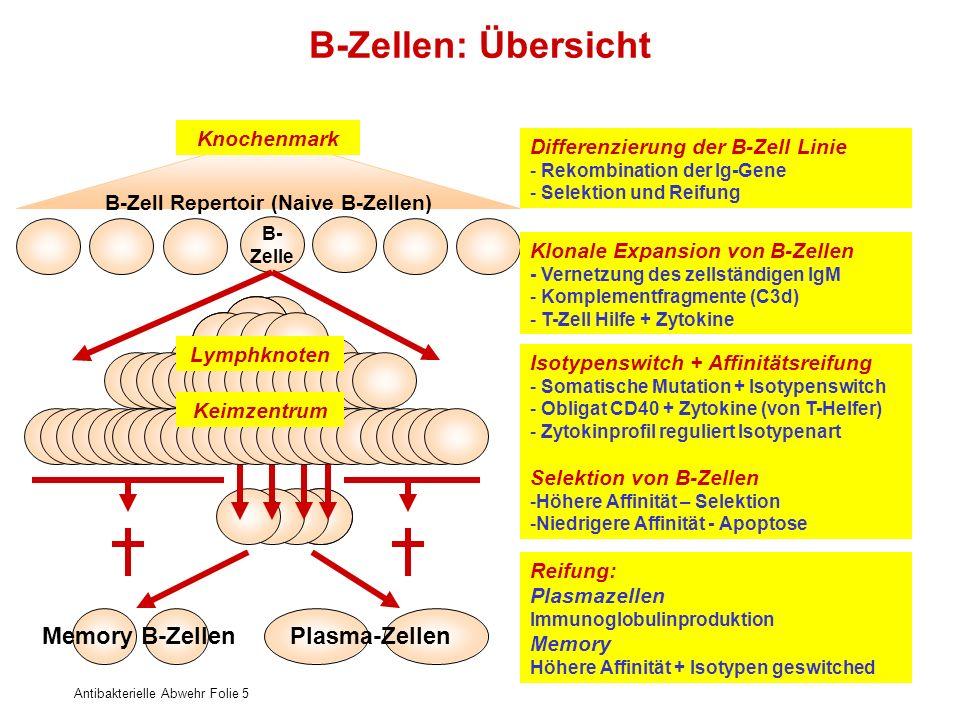 Antibakterielle Abwehr Folie 5 B-Zellen: Übersicht B- Zelle Differenzierung der B-Zell Linie - Rekombination der Ig-Gene - Selektion und Reifung B-Zel