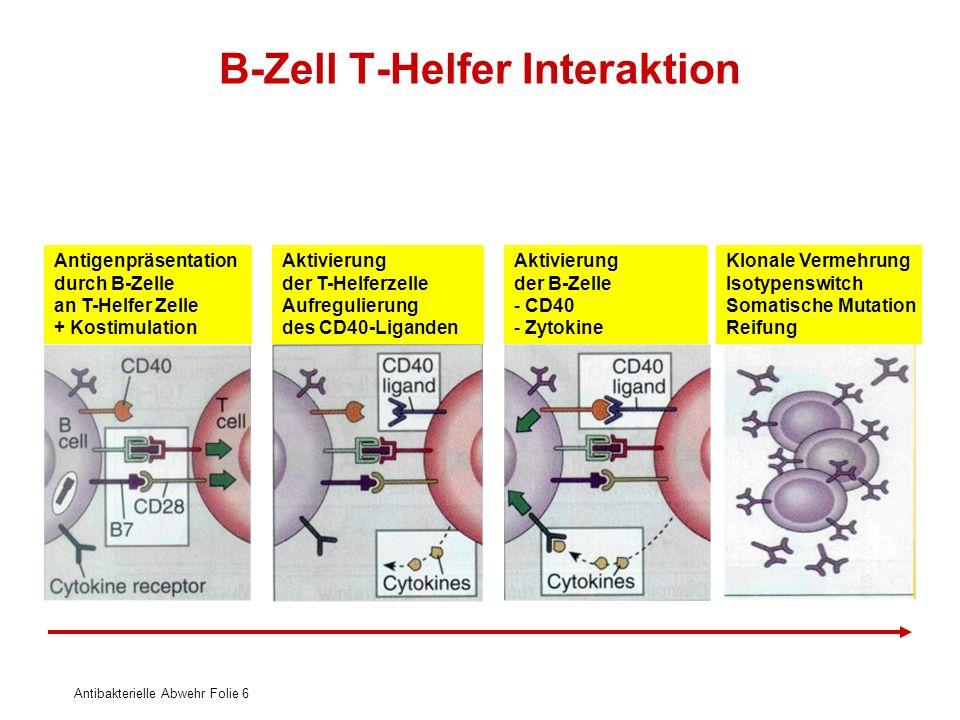 Antibakterielle Abwehr Folie 6 B-Zell T-Helfer Interaktion Antigenpräsentation durch B-Zelle an T-Helfer Zelle + Kostimulation Aktivierung der T-Helfe