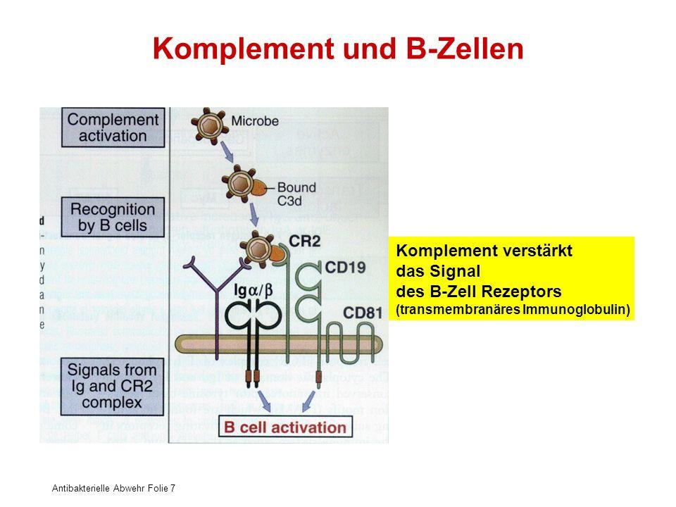 Antibakterielle Abwehr Folie 7 Komplement und B-Zellen Komplement verstärkt das Signal des B-Zell Rezeptors (transmembranäres Immunoglobulin)