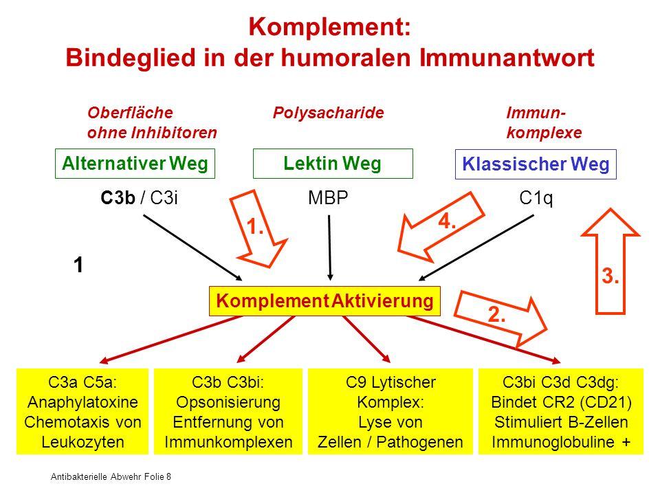 Antibakterielle Abwehr Folie 8 Komplement: Bindeglied in der humoralen Immunantwort Alternativer WegLektin Weg Klassischer Weg Oberfläche ohne Inhibit