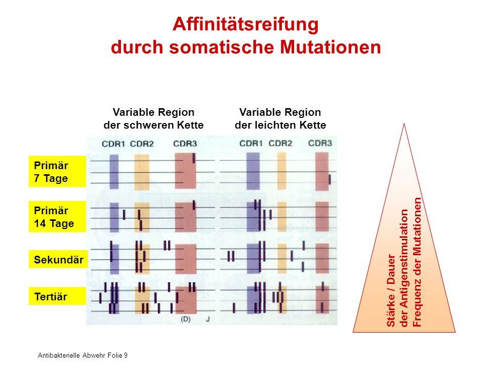 Antibakterielle Abwehr Folie 9 Affinitätsreifung durch somatische Mutationen Variable Region der schweren Kette Variable Region der leichten Kette Pri