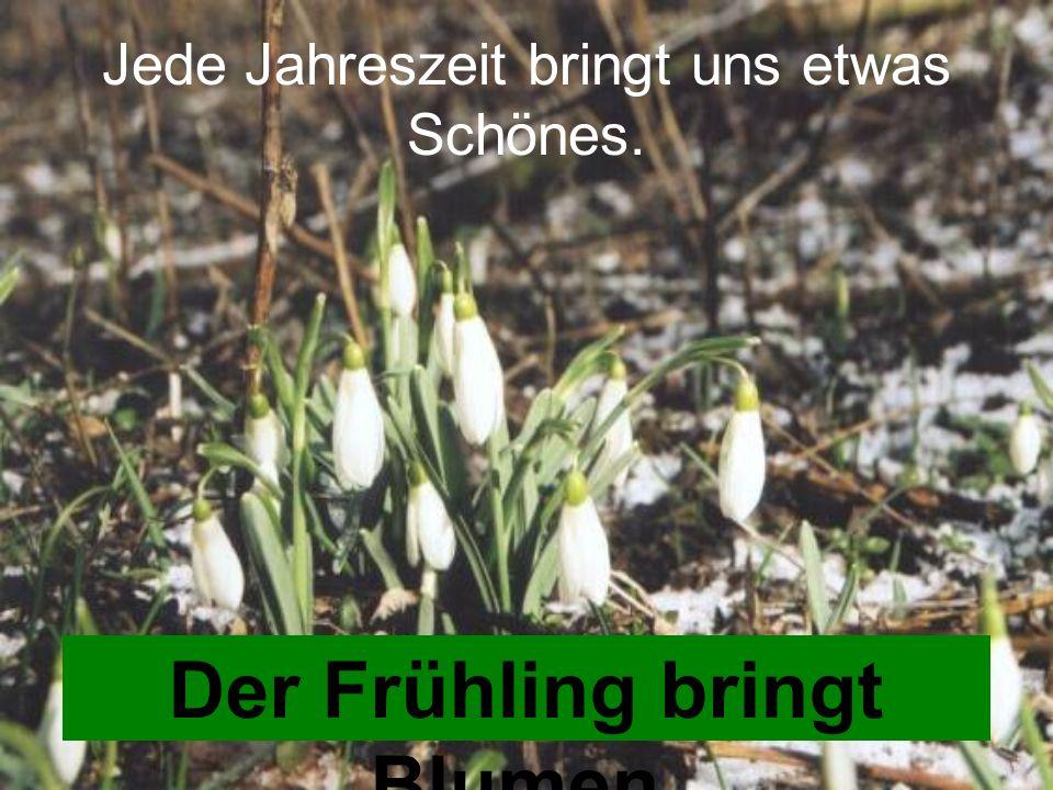 Jede Jahreszeit bringt uns etwas Schönes. Der Frühling bringt Blumen.