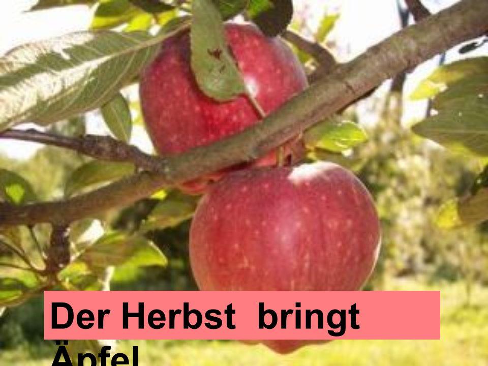 Der Herbst bringt Äpfel.