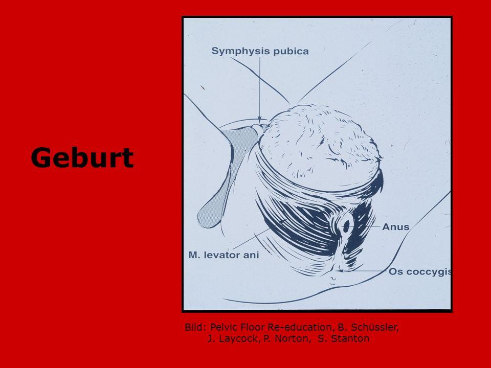 Geburt Bild: Pelvic Floor Re-education, B. Schüssler, J. Laycock, P. Norton, S. Stanton