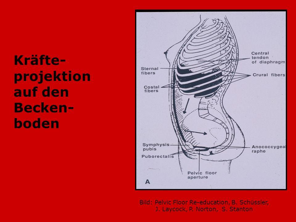 Kräfte- projektion auf den Becken- boden Bild: Pelvic Floor Re-education, B. Schüssler, J. Laycock, P. Norton, S. Stanton