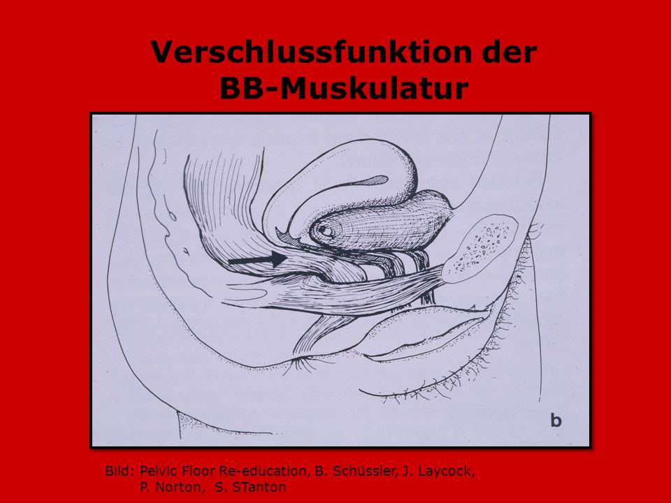 Verschlussfunktion der BB-Muskulatur Bild: Pelvic Floor Re-education, B. Schüssler, J. Laycock, P. Norton, S. STanton