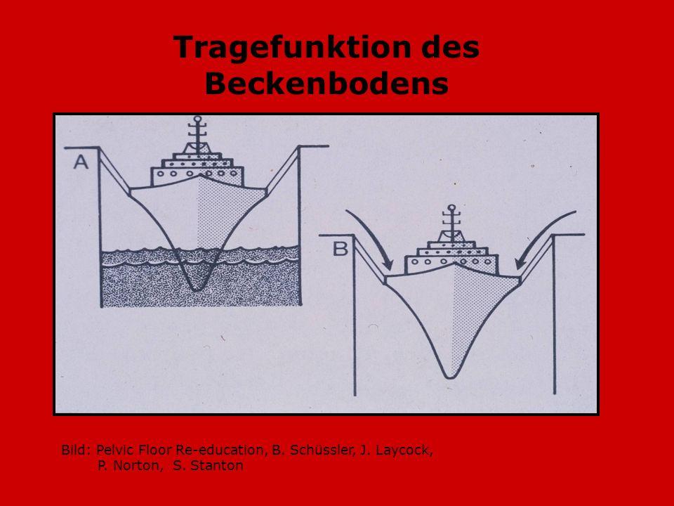 Bild: Pelvic Floor Re-education, B. Schüssler, J. Laycock, P. Norton, S. Stanton Tragefunktion des Beckenbodens