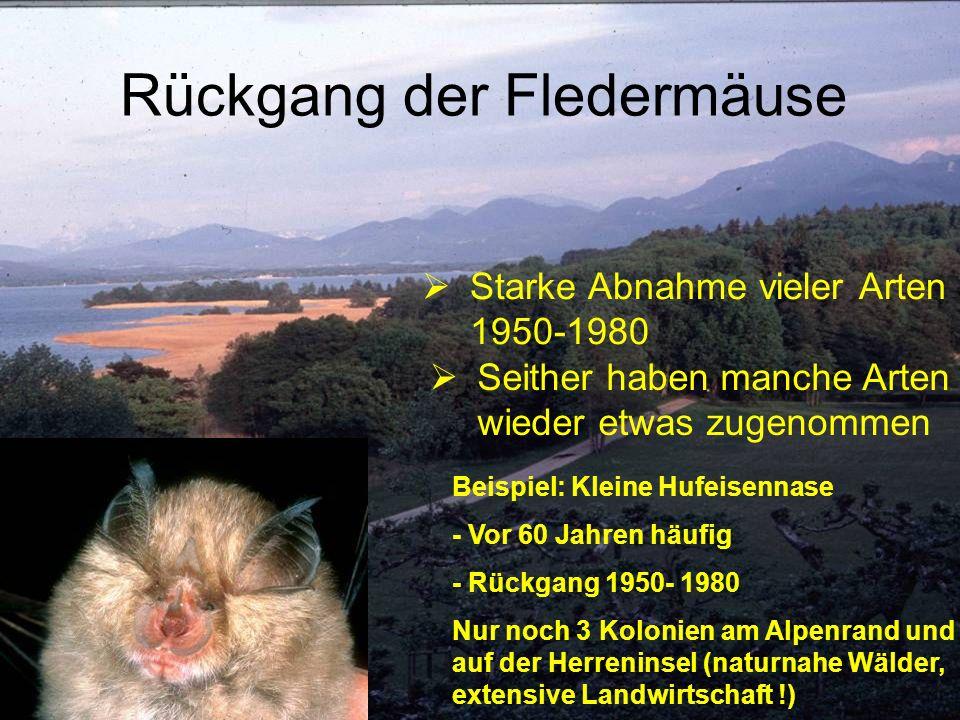 Starke Abnahme vieler Arten 1950-1980 Beispiel: Kleine Hufeisennase - Vor 60 Jahren häufig - Rückgang 1950- 1980 Nur noch 3 Kolonien am Alpenrand und