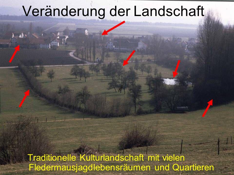 Veränderung der Landschaft Traditionelle Kulturlandschaft mit vielen Fledermausjagdlebensräumen und Quartieren